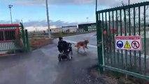 Toulouse : Des personnes handicapés en colère et des gilets jaunes pénètrent sur les pistes de l'aéroport bloquant le trafic aérien
