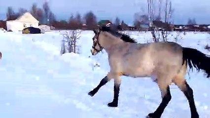 Konj i pas na snijegu