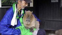 If You Want a Capybara Sitting in Your Lap Go to Nagasaki Bio Park
