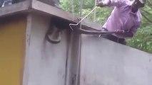 Regardez comment il va déloger un énorme cobra royal caché dans une maison