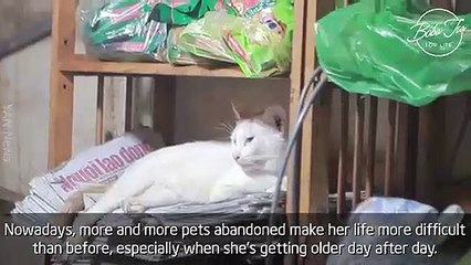 """I love them and I used to be like them..."", said grandma who has devoted herself to keeping abandoned pets"