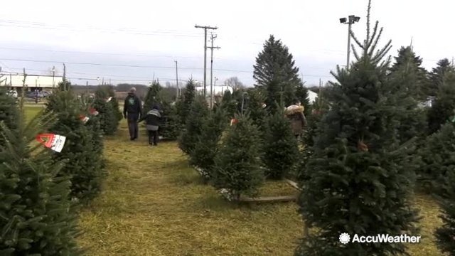 Nice weather to pick out some Christmas trees