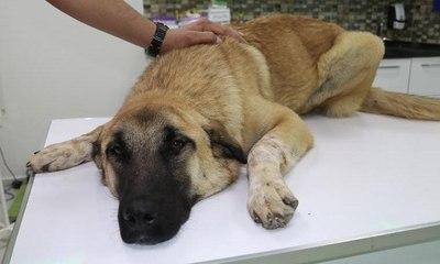 Milas Önder Gazetesi Sokak Köpeklerini Hedef Gösterdi 70