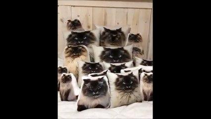 Cherchez le vrai chat parmi les faux