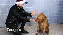 Tours de magie à des chiens abandonnés dans un refuge !