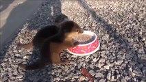 Quoi de plus mignon que ces 2 bébés loutres qui mangent leur petit déjeuner