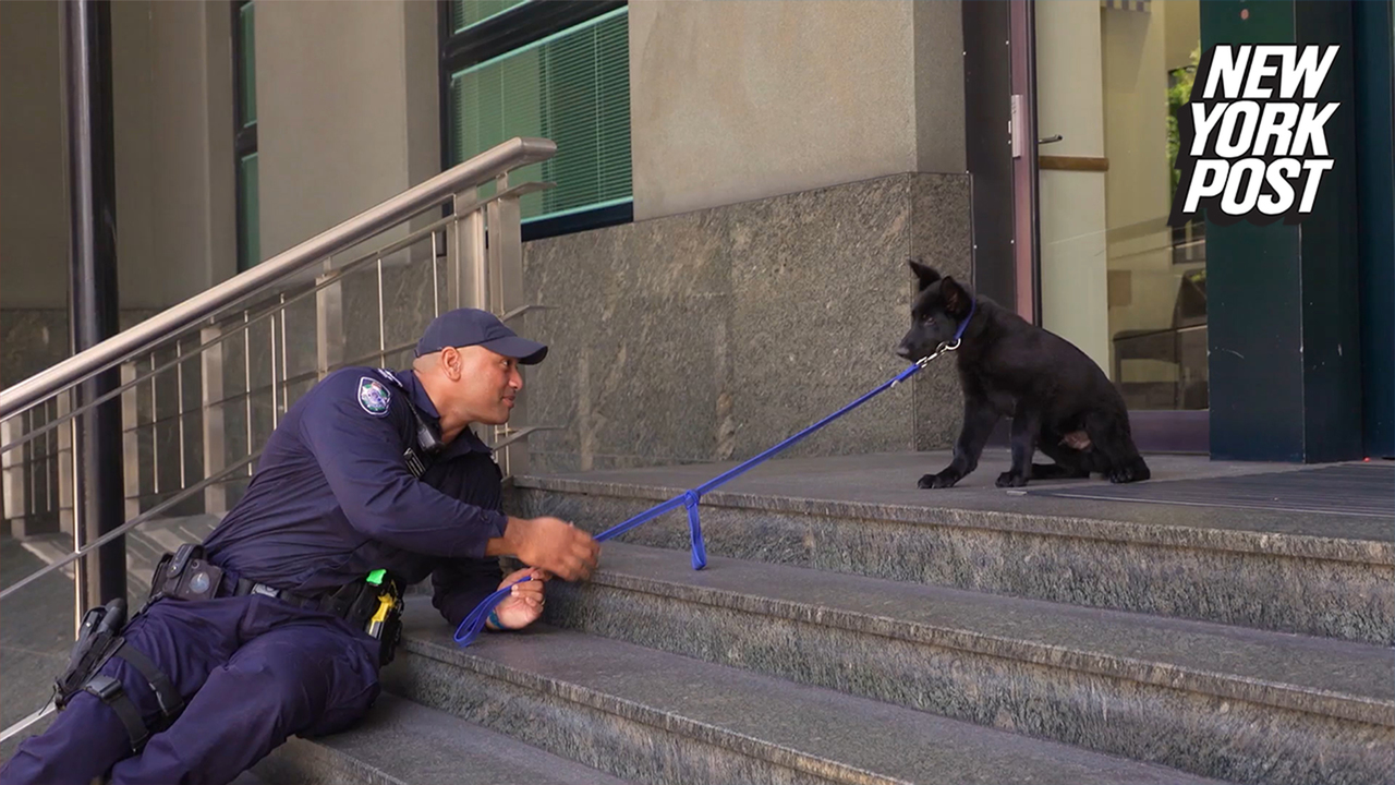 Police puppy's first mission is learning to walk down stairs