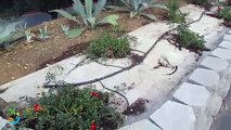 Garden drip irrigation system design and installation above at Landscape Fabric