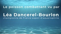 Le poisson combattant vu par Léa Dancerel-Bourlon