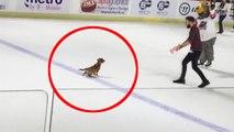 Hond plast op ijshockeybaan na verlies wedstrijd