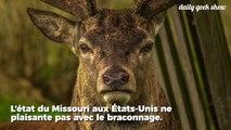 Pour avoir massacré des centaines de cervidés, ce braconnier est condamné à voir Bambi tous les mois