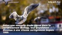 Affamés par la surpêche, 70% des oiseaux marins ont disparu entre 1950 et 2010