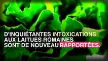 Laitue romaine : 60 nouveaux cas d'intoxication