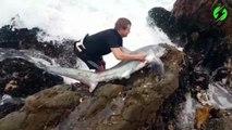 Il prend tout les risques pour sauver un requin échoué dans les rochers