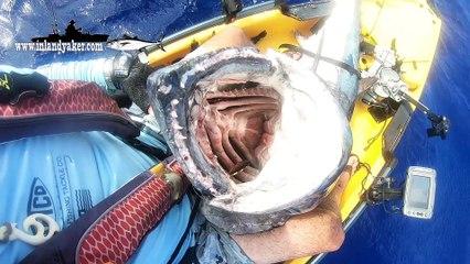 Lone Kayaker Lands 170-Pound Dogtooth Tuna