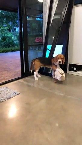Adorable : ce chien et ce canard ne se séparent pas