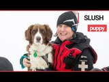 UK's First Avalanche Rescue Dog | SWNS TV