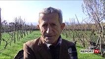 Zadrima e Lezhës prodhuesi kryesor i gjelit të detit, fermerët: Shpendi po shkon drejt zhdukjes