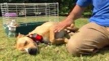 Dog Whisperer Season 2 Episode 3 Buddy, Teddy, and Matilda