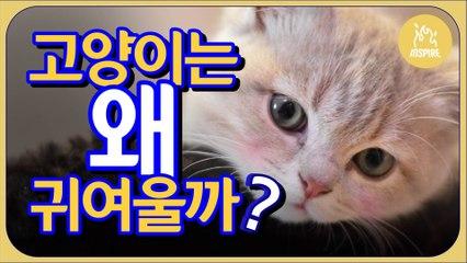 심쿵주의※ 고양이가 너무 OO해서 만든 영상?!! ※심쿵주의ㅣ인스파이어Q