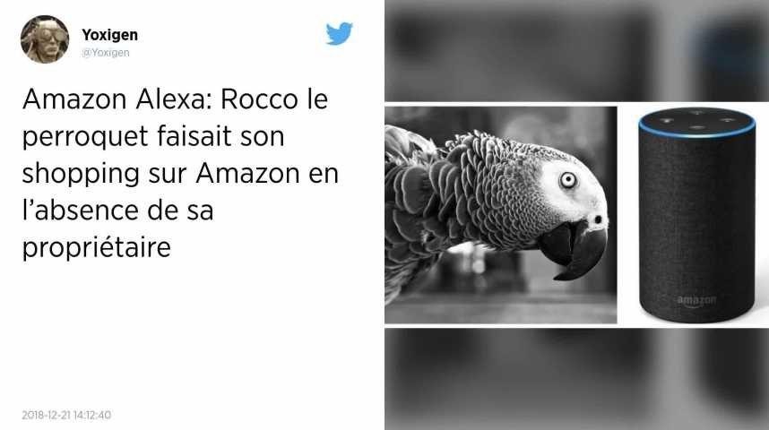 Quand un perroquet utilise une enceinte connectée Amazon pour faire du shopping.