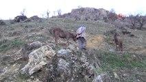 Aç Kalan Kurt Sürüsü Köye İndi Atlara Saldırdı