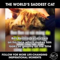 The World's Saddest Cat