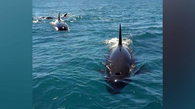 School orka's valt boot aan