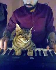 Ce chat joue du piano avec son maître et devient une véritable star sur Internet !