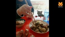 Essayer De Ne Pas Rire - Vidéos Drôles de Chats et de Chiens