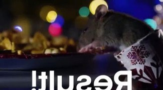 Rats Get A Christmas Treat Cities Nature s New Wild BBC Eart