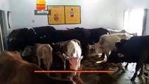 यूपी: अलीगढ़ में आवारा पशुओं को स्कूलों में किया बंद, बच्चों की कराई छुट्टी