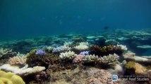 La Grande barrière de corail se meurt de manière inquiétante