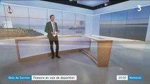 Baie de Somme : des poissons en voie de disparition