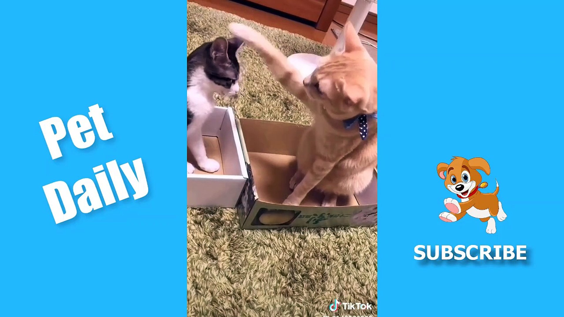 Pet Daily Funny Animals TikTok Pets Compilation #1