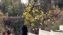 Düden Şelalesi kışın da turistlerin gözdesi - ANTALYA