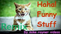 Amazing Funny Animals! make you Laugh Cats & Dogs! Happy Fun Stuff!