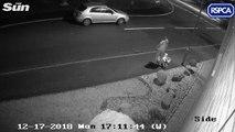 Un homme abandonne lâchement son chien dans la rue avec ses affaires