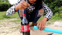 You ever See this Trap ? Installing DIY Bird Trap using coca cola 1L Bottle and Pipe