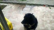 Kedi ile köpeğin ilginç dostluğu...Köpeğin sırtında mama bekleyen kedi gülümsetti