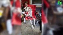 Ce chien veut jouer avec un squelette.... aller, lance moi la balle