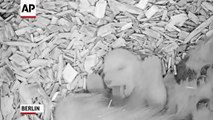 Berlin Zoo releases video of 27 day old polar cub