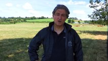 Vidéo. Que sont devenus les vaches sauvées il y a un à Saint-Vit (Doubs) par la Fondation Brigitte Bardot