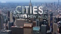 Cities Natures New wild S01E01 Residents (2019) Documentary.Series