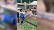 Ce bébé éléphant met des baffes avec sa trompe... trop mignon !