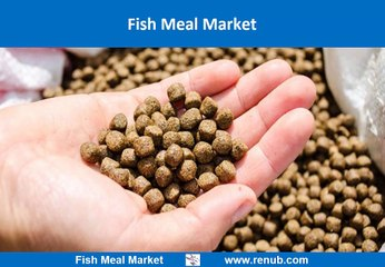 Fish Meal Market is expected to be 6.8 Thousand Tons by 2024