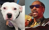 Snoop Dogg Offers to Adopt Abandoned Dog Named 'Snoop'