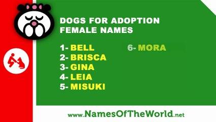 Dogs for adoption female names - the best pet names - www.namesoftheworld.net
