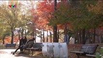 Kẻ Thù Ngọt Ngào Tập 95 , Ngày 7/1/2019 , VTV1 Thuyết Minh , Phim Hàn Quốc , Phim Ke Thu Ngot Ngao Tap 95 , Ke Thu Ngot Ngao Tap 96