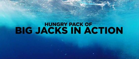 Pacific Jacks Attack!